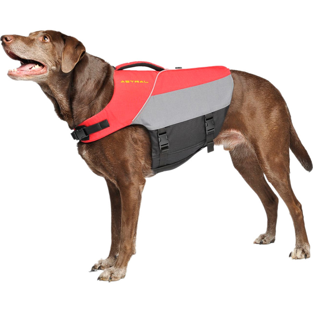 Astral Bird Dog Life Jacket Red M